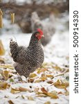 hen on a background of autumn... | Shutterstock . vector #500914330