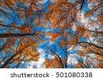 design element. forest sky  top ... | Shutterstock . vector #501080338