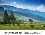 cows grazing in alpine meadows. ... | Shutterstock . vector #501083470