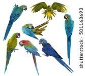 set of beautiful macaw birds... | Shutterstock . vector #501163693
