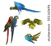 collection of macaw birds... | Shutterstock . vector #501163696