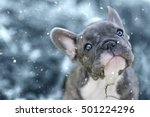 Stock photo  months old french bulldog and his first snow 501224296