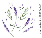 Stock photo watercolor hand drawn illustration of lavender can be used as background for web pages textile 501236740