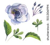Wildflower Anemone Flower In A...