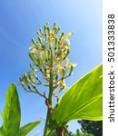 Small photo of Looking at the sky through the apex of flower of Alpinia galanga