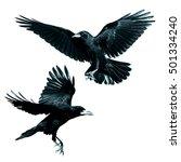 birds   rook  corvus frugilegus ... | Shutterstock . vector #501334240