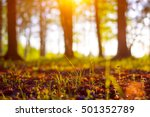 close up ecology nature... | Shutterstock . vector #501352789