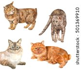 Collection Of Cats  White ...
