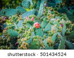 Light Purple Cactus Flower In...