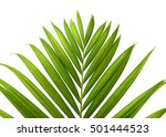 palm leaves isolated on white | Shutterstock . vector #501444523