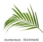 green leaf of palm tree on... | Shutterstock . vector #501444640