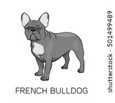 brown french bulldog vector... | Shutterstock .eps vector #501499489
