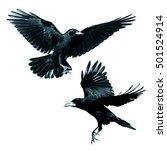 Birds   Rook  Corvus Frugilegu...