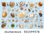 composition of exotic sea...   Shutterstock . vector #501599578