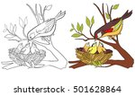 coloring book page bird and... | Shutterstock .eps vector #501628864