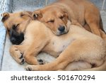 Stock photo two puppies 501670294