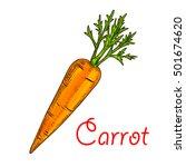 farm carrot vegetable isolated... | Shutterstock .eps vector #501674620