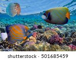 coral reef and tropical fish in ... | Shutterstock . vector #501685459