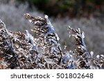 Hoarfrost In Mount Zao
