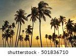 Palm Trees At Sunset Sunrise...