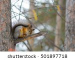 Squirrel Sitting On A Branch I...