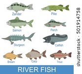 river fish identification slate ... | Shutterstock .eps vector #501914758