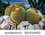 Round Shaped Cactus In Summer...