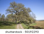 country road in spring landscape | Shutterstock . vector #50192293