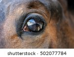 Eye Of A Brown Horse Close Up.