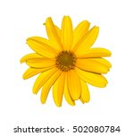 Yellow Flower Isolated On Whit...
