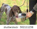 german shorthaired pointer... | Shutterstock . vector #502111258