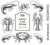 hand drawn crustacean in a... | Shutterstock .eps vector #502184353