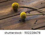 Billy Buttons On Rustic Woode...