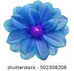 blue  flower garden  white ...   Shutterstock . vector #502308208