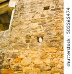 Small photo of Vertical, close up shot of a white dove sitting in an alcove in an old brick wall. This was shot in Gibraltar.