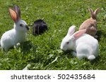 four coloured rabbits on the... | Shutterstock . vector #502435684