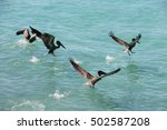 pelicans floating in the... | Shutterstock . vector #502587208