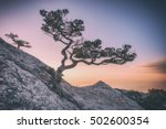 tree on rock in crimea  toned... | Shutterstock . vector #502600354