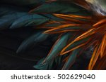 background of chicken feathers | Shutterstock . vector #502629040
