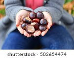 Girl Holding Many Chestnuts In...