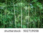 Bamboo Trees And Leaves In Park