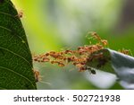 ant bridge unity team | Shutterstock . vector #502721938