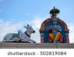 Sacred Cows On The Roof Of The...