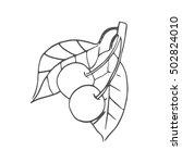 cherry vector scetch | Shutterstock .eps vector #502824010