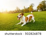 play with me  come on friends ... | Shutterstock . vector #502826878