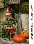 pumpkin sitting and flower in a ... | Shutterstock . vector #502849294