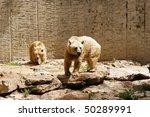 bear  ursus arctos syriacus | Shutterstock . vector #50289991