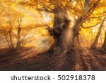 Magical Old Tree With Sun Rays...