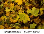 leaf litter | Shutterstock . vector #502945840