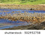 Colonies Of Birds On Rocks...